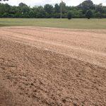 no till tifeagle for greens sprig planting