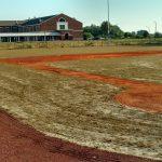 Sprig Plant TifWay 419 Bermuda Sprigs Baseball Field New