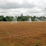 sprig planting irrigation tifton turf